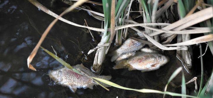Bursa'daki balık ölümleri araştırılacak
